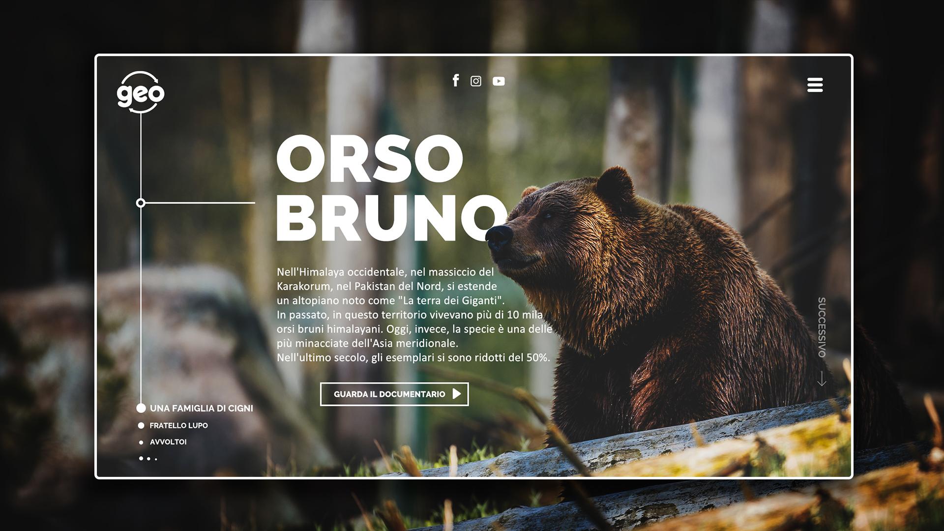 Orso bruno page